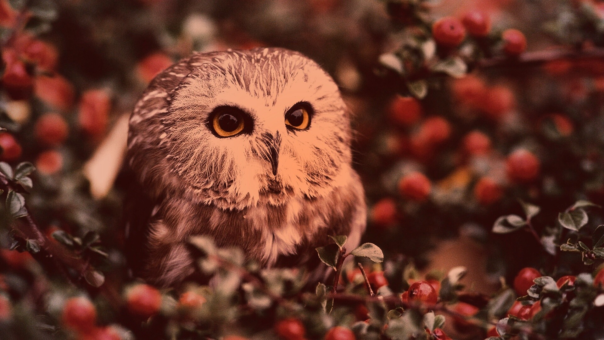 Owl species with pictures Most Autistic People Have Normal Brain Anatomy - Neuroskeptic